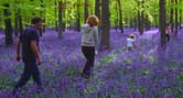 bluebells-family-walking-166x89